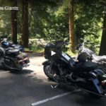 Avenue of the Giants | Riding Humboldt County