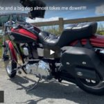 98 Wide Glide and a big dog almost takes me down!!!!! | Riding Humboldt County